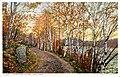 A Northern Autumn, Birch Drive (NBY 8702).jpg
