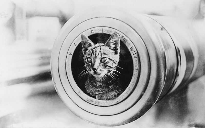 File:A cat on HMAS Encounter.jpg