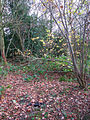 A glimpse into the woods - geograph.org.uk - 1060412.jpg