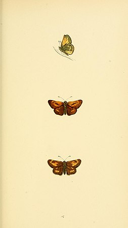 A history of British butterflies BHL14821390.jpg