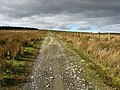 A track running through rough grazing land - geograph.org.uk - 734017.jpg