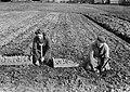 Aardappelen poten Opperdoes (Medemblik), Bestanddeelnr 904-4852.jpg