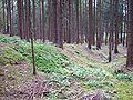 Abschnittsbefestigung Nisselsbach 2.jpg