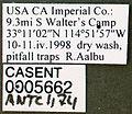 Acromyrmex versicolor casent0005662 label 1.jpg
