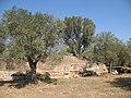 Acropolis of ancient Sparta - panoramio - macrolepis.jpg