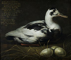 Portrait of the Sitting Duck 'Sijctghen'