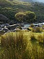 Afon Nant Peris - geograph.org.uk - 403975.jpg