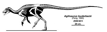 Agilisaurus louderbacki.jpg