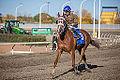 Alberta Breeders' Fall Classic 2014 - Horse Racing (15117921119).jpg
