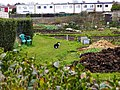 Allotments, Barnfield Close, Swindon - geograph.org.uk - 366716.jpg
