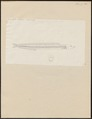 Ammodytes tobianus - 1774-1804 - Print - Iconographia Zoologica - Special Collections University of Amsterdam - UBA01 IZ14000145.tif