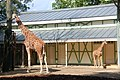 Amsterdam Zoo (3799364144).jpg