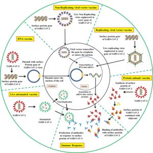COVID vaccine development