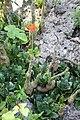 Andromeda Botanical Gardens 22.jpg
