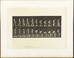Animal locomotion. Plate 202 (Boston Public Library).jpg