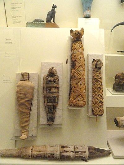 Египтянки с большими дой фото 344-93