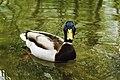 Animals- Anita Dilrukshi (2).jpg