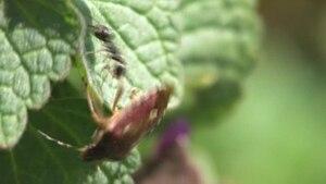 File:Ant Bug.ogv