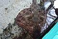 Antibes - panoramio - avu-edm (47).jpg