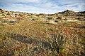 Anza-Borrego desert (13496645123).jpg