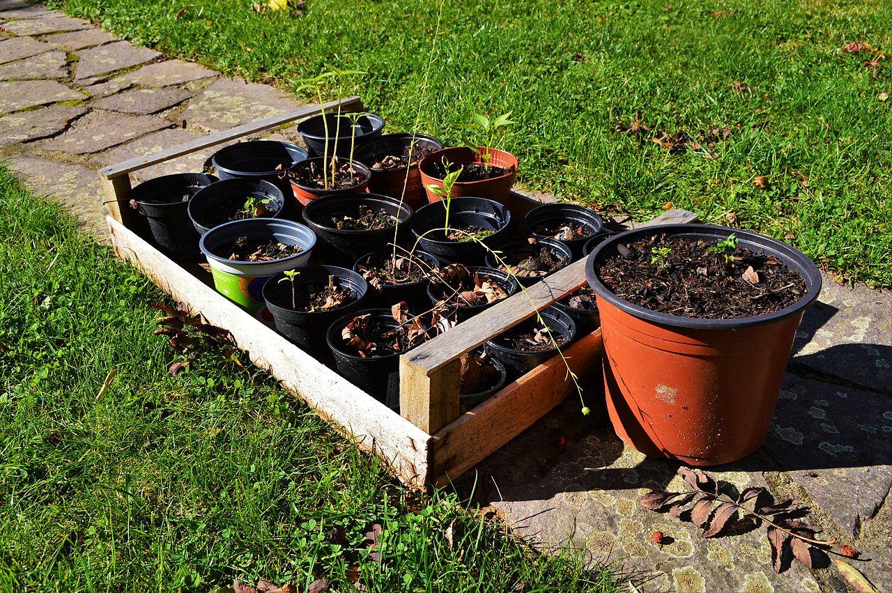 File Anzuchtstation Pflanzen Garten Wikimedia mons