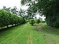 Apple Orchard - geograph.org.uk - 1364468.jpg