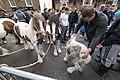 Appleby Horse Fair (7172452567).jpg