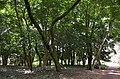 Arboretum Rwanda 2.jpg