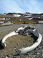 Arctowski Station Whale Bones.JPG