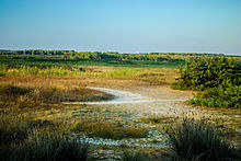 Area Naturale Protetta Palude Del Conte