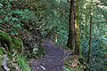 Around Geroldsau Waterfall 2020-03-13 02.jpg
