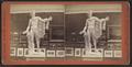 Art Gallery, Vassar College, with Apollo Belvedere, by Pach, G. W. (Gustavus W.), 1845-1904.png