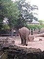 Artis, Zoo, Dierentuin - panoramio (64).jpg