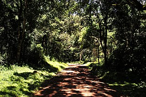 Arusha National Park - Image: Arusha National Park Jungle Road