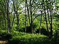 Ash woodland on Twyford Down - geograph.org.uk - 181694.jpg