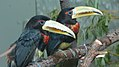 Assiniboine Park Zoo, Winnipeg (480500) (9447808822).jpg