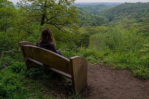 At Hackfall Wood (37289896)