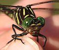 Audreyjm529 - Green Eyes (by).jpg