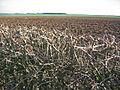 Aunhamdale Farm - geograph.org.uk - 110691.jpg