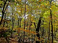 Autumn in Devils Lake State Park - panoramio (1).jpg