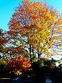 Autumn in Madison - panoramio (21).jpg