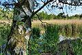 Bürmooser Moor 12.jpg