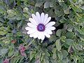 BCBG Flowers 16.jpg