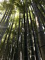 Bambu garden kamakura.jpg