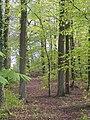 Barns Plantation - May 2012 - panoramio.jpg