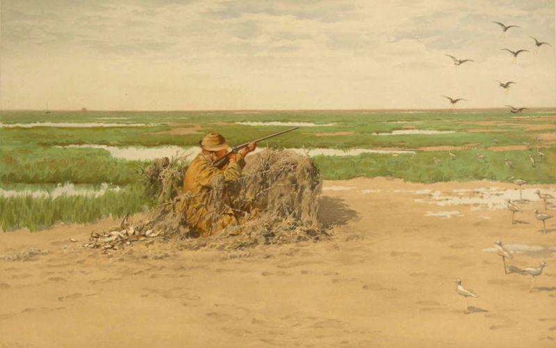 File:Bay Snipe, by A B Frost from Shooting Pictures, by Scribner & Sons, 1895.jpeg