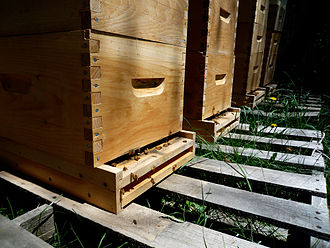 Beneficial insects - Bee boxes at an organic farm