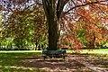 Beech and bench (20150503-DSC04975).jpg