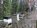 Beehives in woodland near Aberwheeler - geograph.org.uk - 1153393.jpg