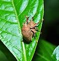 Beetle (9410103656).jpg